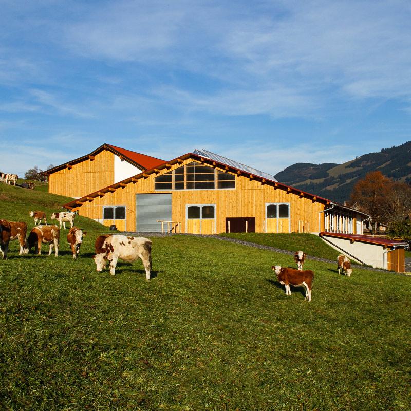 Kühe auf Wiese | Ferienhof Vogler in Fischen i. Allgäu